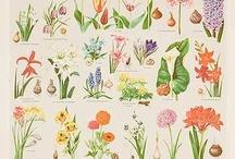 botany is beauty