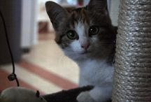 Crème / #cat #kitten