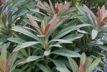 Plants for Baker Pond