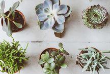 Succulents 2.0
