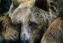 Bear / by Cébienfait !