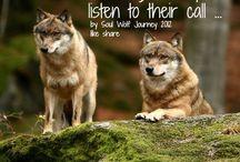 Wolfs ❤
