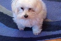 Jasper (Winnie's big brother)