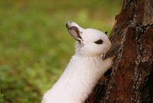 Little souls - Rabbits