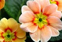 Orange Flowers / Orange flowers