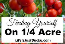 Grow Your Own Food / Gardening, growing food, how to grow your own food, grow your own vegetables and fruit, self sustainability