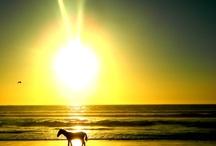 Horses <3  / by Kristen Spencer