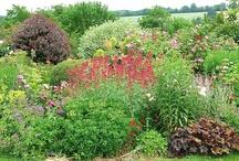 plantes et vivaces