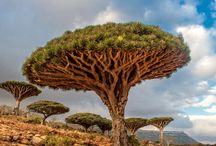 nature / by Didier Vincent
