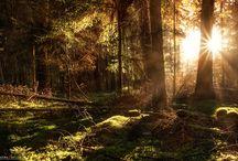 Projekt  - Forest / Odenwald