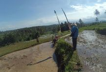 Trekking Rice Field