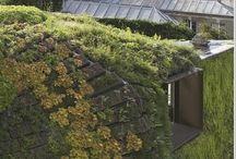 Arkitektur - Gröna Tak / Takterrasser