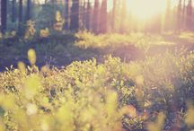 MY PHOTOGRAPHY / All pictures are (c) me