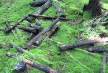 Wald, Wiese und Schwamma - Metaller.de / Bilder von Wald, Natur und Pilze suchen - Waldpenis