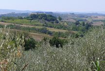 Chianti hills / There are 100 different views....all different Find out your own view by coming here
