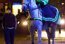 Hallies pony club preso / by Ruth Della