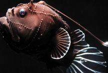 0 Fish