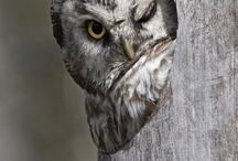 owls-baykuşlar