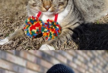 Crochet - Pet Fashion And Accessories !