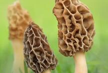 houby / houby