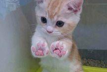 Katzen Baby's