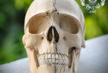 Carved Human Skull Realistic Tamarind Wood THB4 / Already SOLD to NewYork
