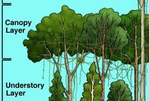 regnskogen