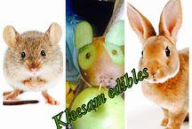 Rabbit kiwi / Fruit