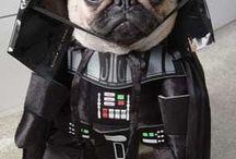 Pugs *snooorrrk*