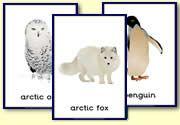 Preschool arctic animal theme