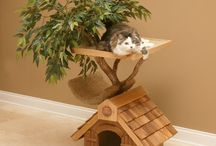 Cat Furniture / by Elizabeth Martin