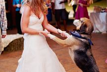 { Dogs at the Wedding } / by Unique Engagement Rings - Rings4love.com