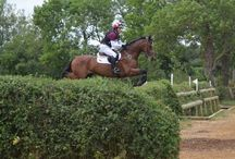 Allinflex Equine Affordable & Effective! / Nutritional Joint Supplement used by Olympians & Top Riders all over the world.