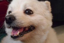 Dog / Denver the Kuwaiti rescue dog