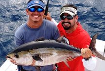 Miami bayside charter boat / Miami deep sea fishing charter is very enjoyable. Custom are outing  the conditions and experience the fishing style. Its mission is to give an outstanding Miami fishing experience deep ocean fishing are close behind abundance like salfish ,marlin, dolphin.