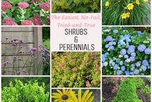 Gardening / easy care plants