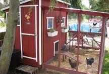 Chicken home