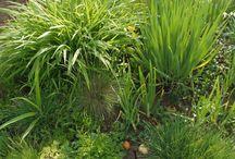 в моём саду(my garden)