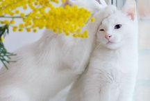 Gatos / Mi mascota preferida