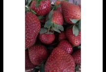 Jual Busah Strawberry Online - Ciwidey, Bandung