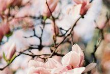 Blissful blossom