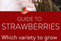 culture berries