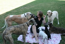 My Dogs!  / My hodge-podge dog family :-) / by Beth Berry Amos-Lambdin