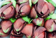 Amaryllis / A selection of amaryllis varieties available at New Covent Garden Flower Market