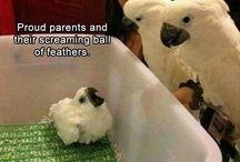 hilarious bird jokes