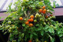 cultivo y jardineria