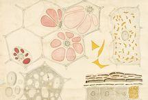 Patterns & Cellular