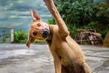 Podaj łapę! / High five
