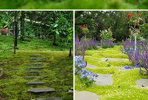 Growing moss & Gardens