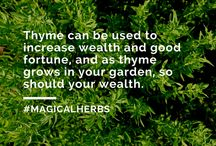 Herbs to Attract Money